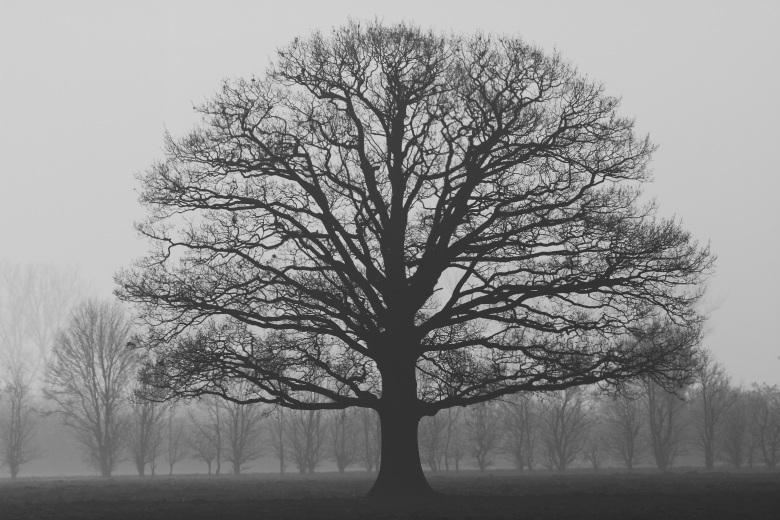 It's Not me, It's You tree.jpeg